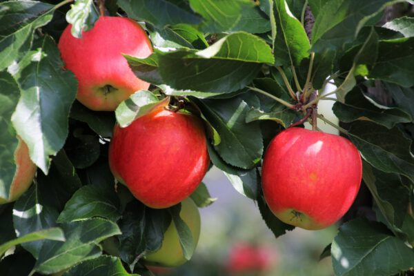 Wyzwania eksportowe producentów warzyw i owoców
